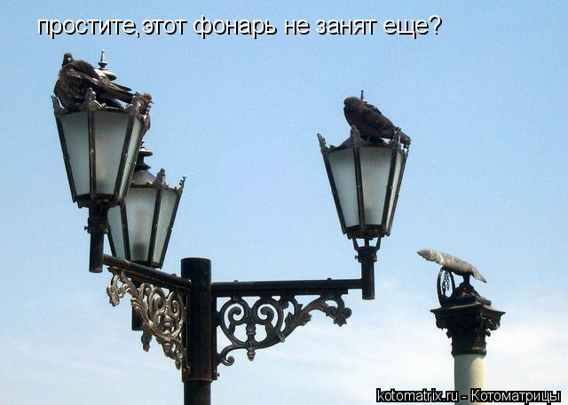 Котоматрица: простите,этот фонарь не занят еще?