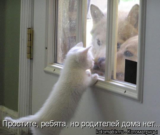 Котоматрица: Простите, ребята, но родителей дома нет...