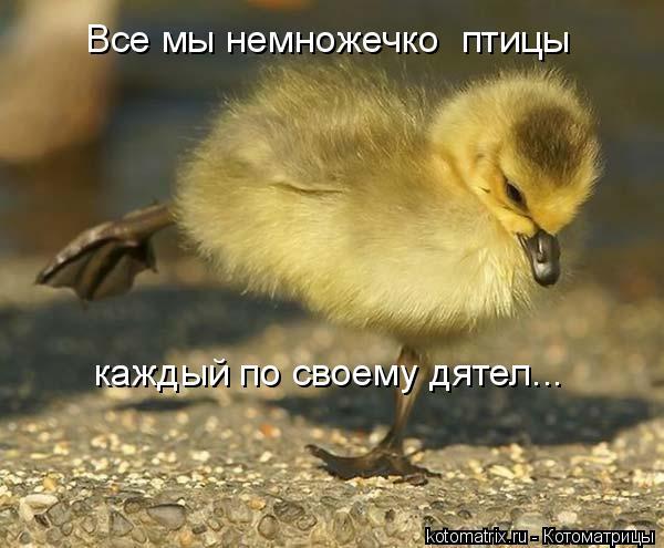 Котоматрица: Все мы немножечко  птицы каждый по своему дятел...