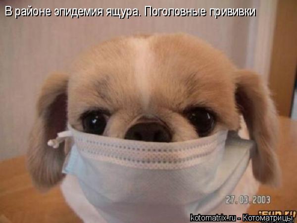 Котоматрица: В районе эпидемия ящура. Поголовные прививки