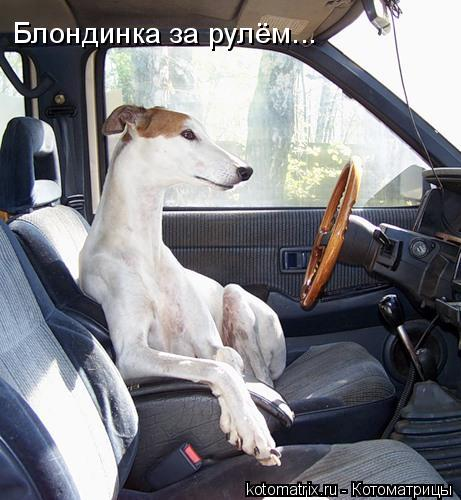 Котоматрица: Блондинка за рулём...