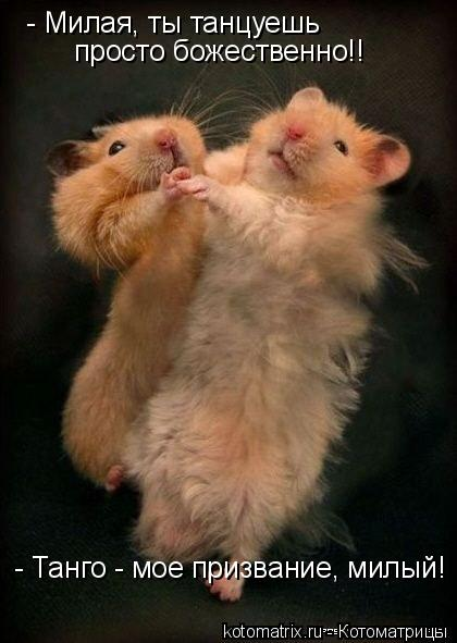 Котоматрица: - Милая, ты танцуешь просто божественно!! - Танго - мое призвание, милый!
