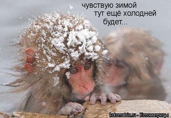 Котоматрица: чувствую зимой тут ещё холодней будет...