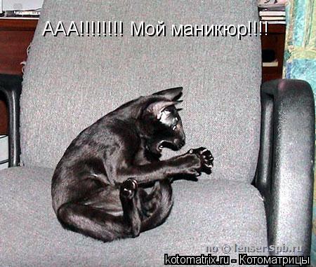 Котоматрица: ААА!!!!!!!! Мой маникюр!!!!