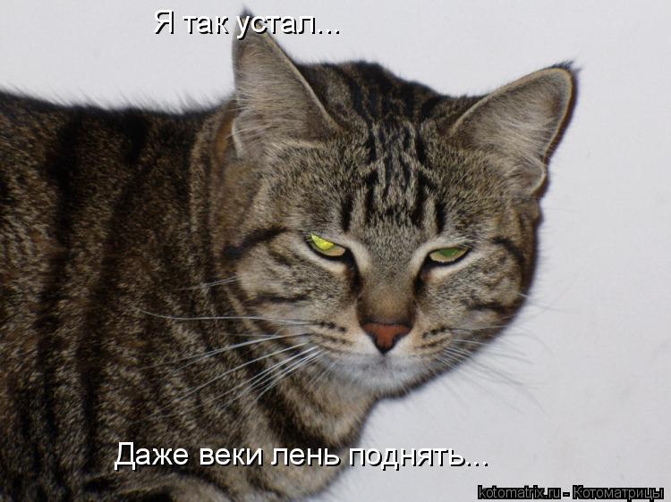 Котоматрица: Я так устал... Даже веки лень поднять...
