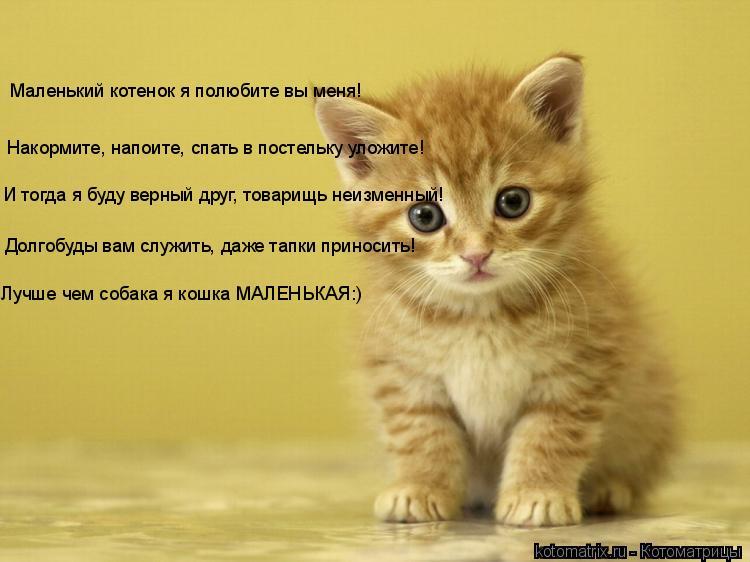 Котоматрица: Маленький котенок я полюбите вы меня! Накормите, напоите, спать в постельку уложите! И тогда я буду верный друг, товарищь неизменный! Долгоб