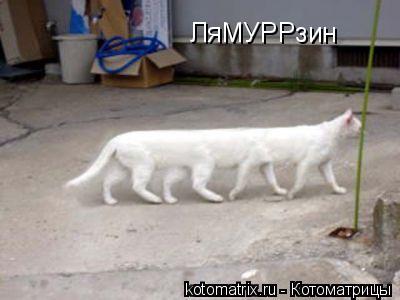 Котоматрица: ЛяМУРРзин