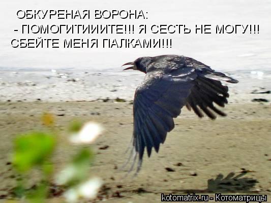 Котоматрица: ОБКУРЕНАЯ ВОРОНА: - ПОМОГИТИИИТЕ!!! Я СЕСТЬ НЕ МОГУ!!! СБЕЙТЕ МЕНЯ ПАЛКАМИ!!!