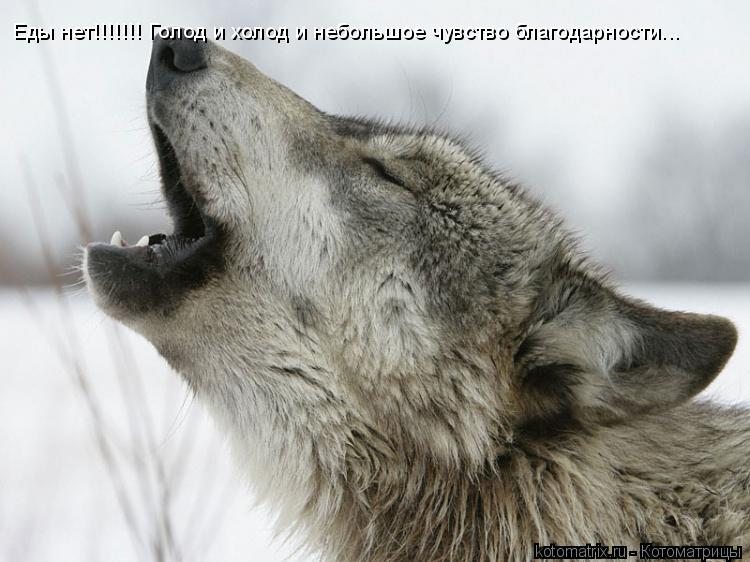 Котоматрица: Еды нет!!!!!!! Голод и холод и небольшое чувство благодарности...