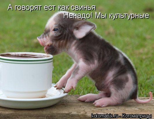 Котоматрица: А говорят ест как свинья  Ненадо! Мы культурные