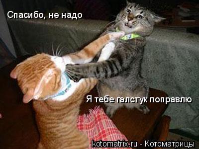 Котоматрица: Я тебе галстук поправлю Спасибо, не надо