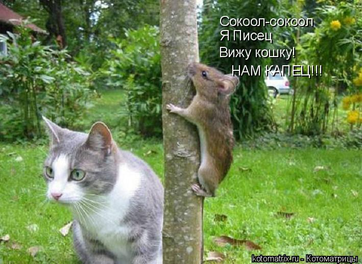 Котоматрица: Сокоол-сокоол Я Писец Вижу кошку! НАМ КАПЕЦ!!!