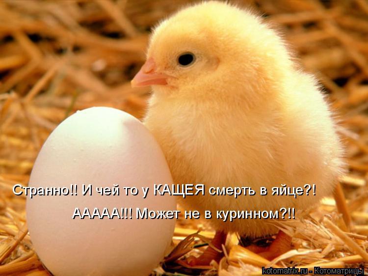 Котоматрица: Странно!! И чей то у КАЩЕЯ смерть в яйце?!  ААААА!!! Может не в куринном?!!