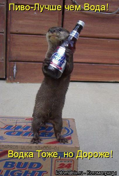 Котоматрица: Пиво-Лучше чем Вода! Водка Тоже, но Дороже!
