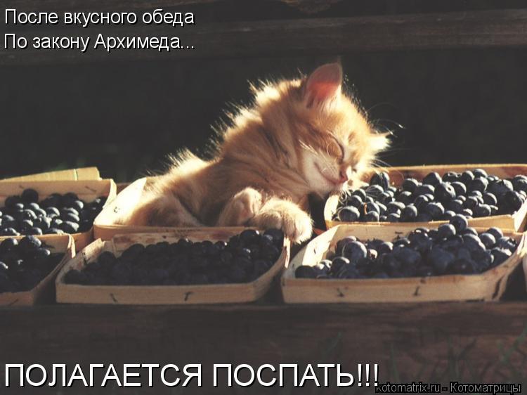 Котоматрица: После вкусного обеда По закону Архимеда... ПОЛАГАЕТСЯ ПОСПАТЬ!!!