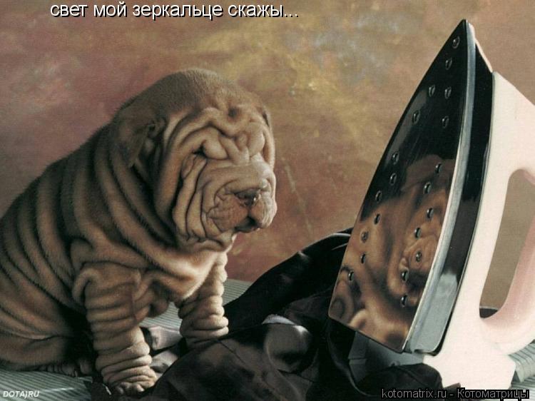 Котоматрица: свет мой зеркальце скажы...