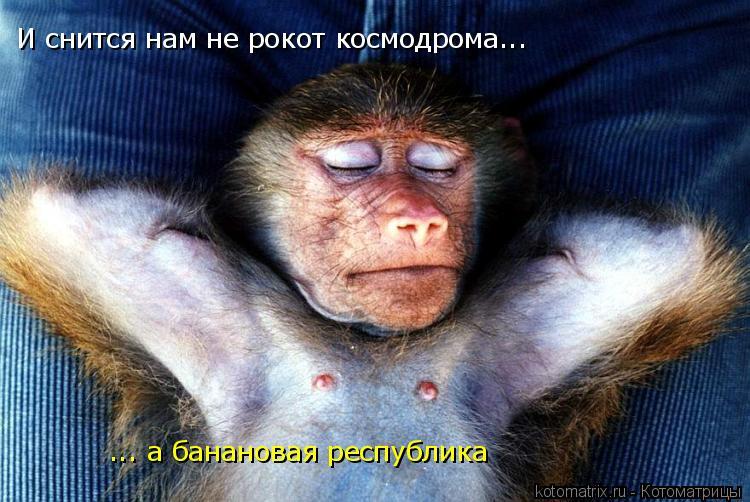 Котоматрица: И снится нам не рокот космодрома... ... а банановая республика