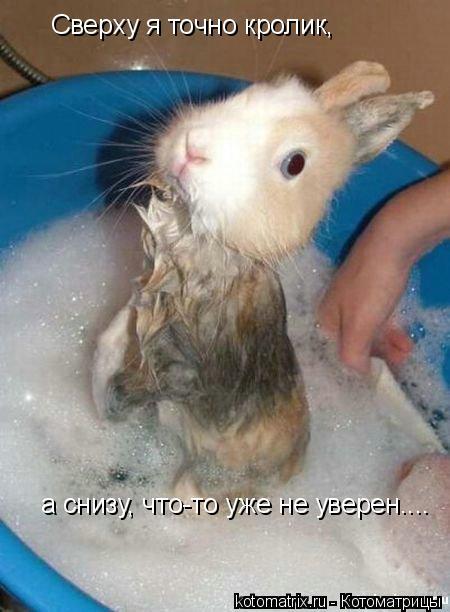 Котоматрица: Сверху я точно кролик, а снизу, что-то уже не уверен....