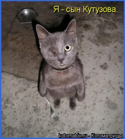 Котоматрица: Я - сын Кутузова.
