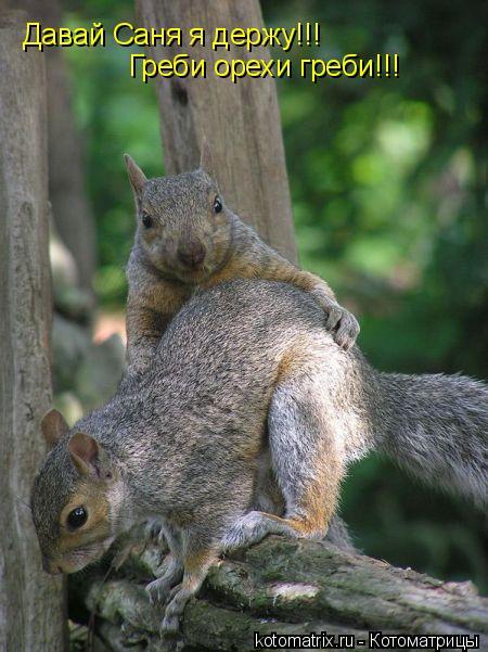 Котоматрица: Давай Саня я держу!!! Греби орехи греби!!!