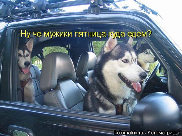 Котоматрица: Ну че мужики пятница куда едем?