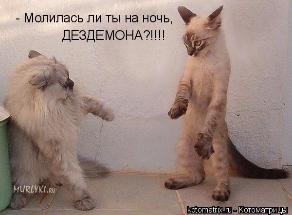 Котоматрица: - Молилась ли ты на ночь, ДЕЗДЕМОНА?!!!!