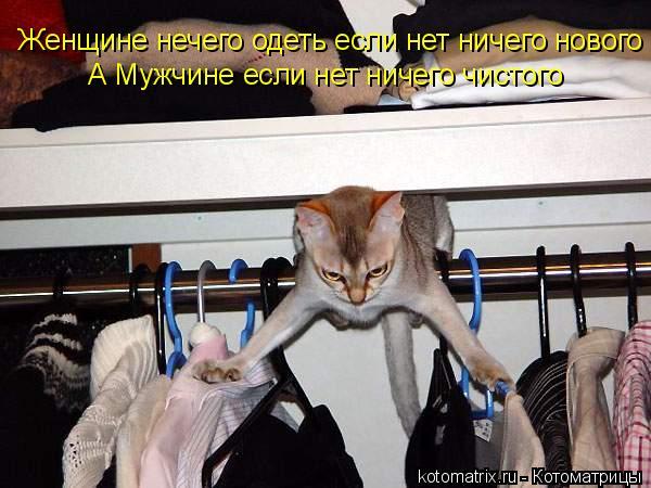 Котоматрица: Женщине нечего одеть если нет ничего нового А Мужчине если нет ничего чистого