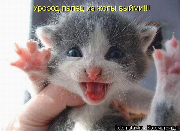 Котоматрица: Урооод палец из жопы выйми!!!