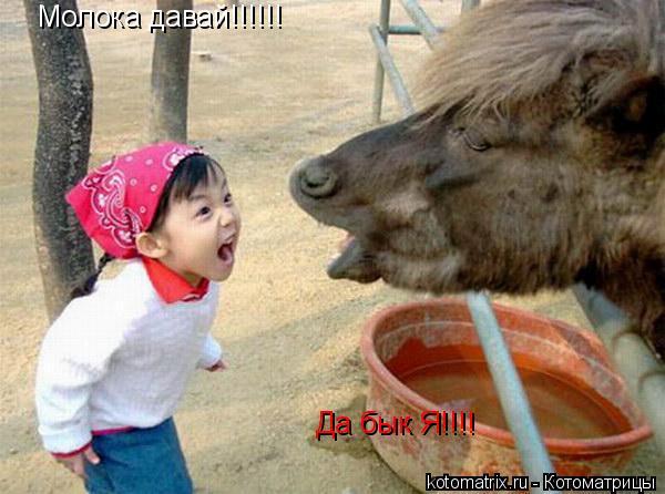 Котоматрица: Молока давай!!!!!! Да бык Я!!!!
