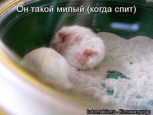 Котоматрица: Он такой милый (когда спит)