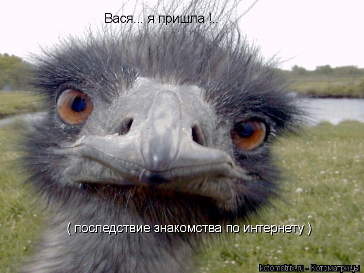 Котоматрица: Вася... я пришла !.. ( последствие знакомства по интернету )