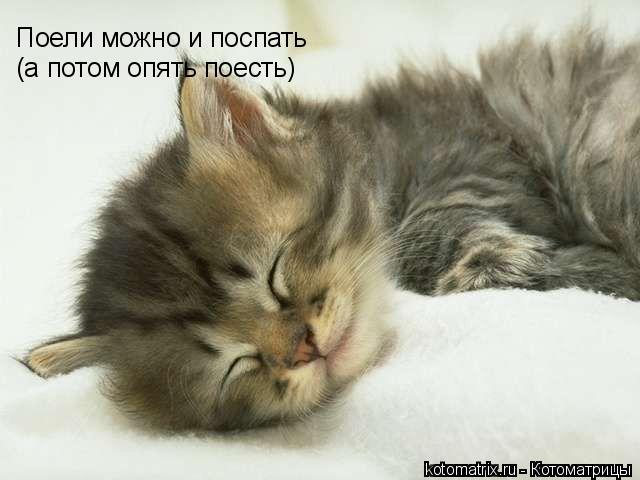 Котоматрица: Поели можно и поспать (а потом опять поесть)