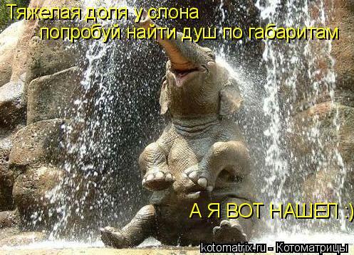 Котоматрица: Тяжелая доля у слона попробуй найти душ по габаритам А Я ВОТ НАШЕЛ :)