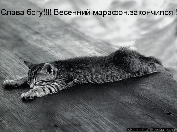 Котоматрица: Слава богу!!!! Весенний марафон,закончился!!!