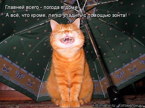 Котоматрица: Главней всего - погода в доме!  А всё, что кроме, легко уладить с помощью зонта!