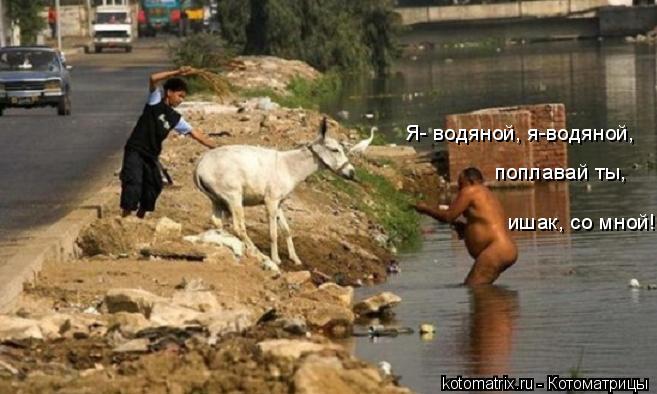 Котоматрица: ишак, со мной!!! поплавай ты, Я- водяной, я-водяной,
