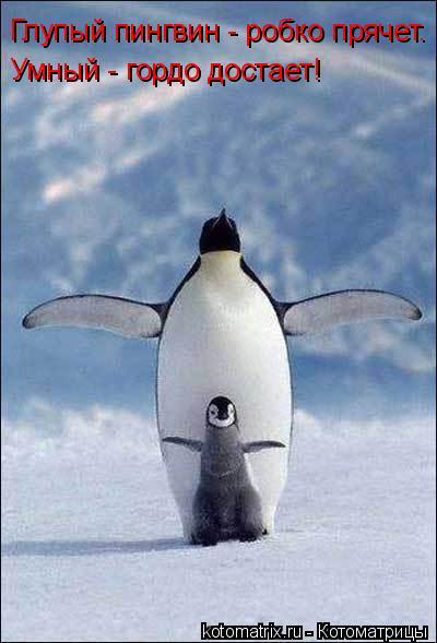 Котоматрица: Глупый пингвин - робко прячет. Умный - гордо достает!