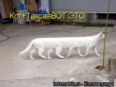 Котоматрица: Кот+Такса=ВОТ ЭТО