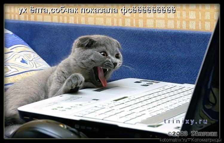 Котоматрица: ух ёпта,собчак показала фсёёёёёёёёё