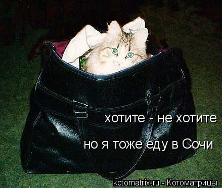 Котоматрица: хотите - не хотите но я тоже еду в Сочи