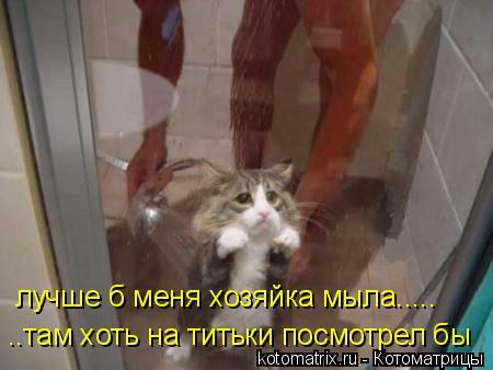 Котоматрица: лучше б меня хозяйка мыла..... ..там хоть на титьки посмотрел бы