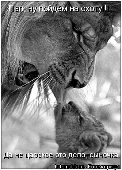 Котоматрица: Пап, ну пойдём на охоту!!! Да не царское это дело, сыночка.