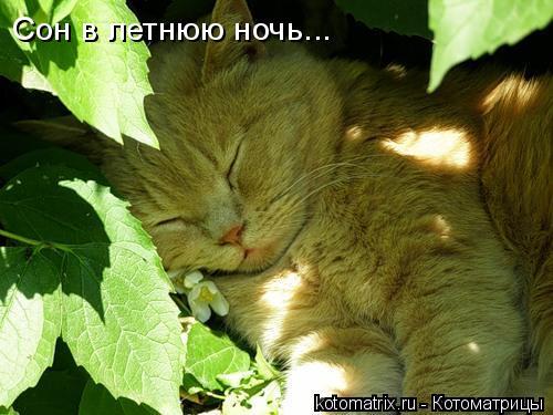 Котоматрица: Сон в летнюю ночь...