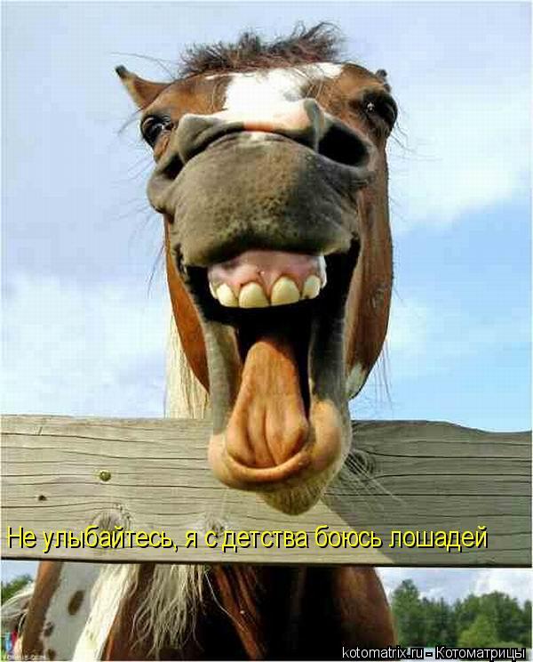 Котоматрица: Не улыбайтесь, я с детства боюсь лошадей