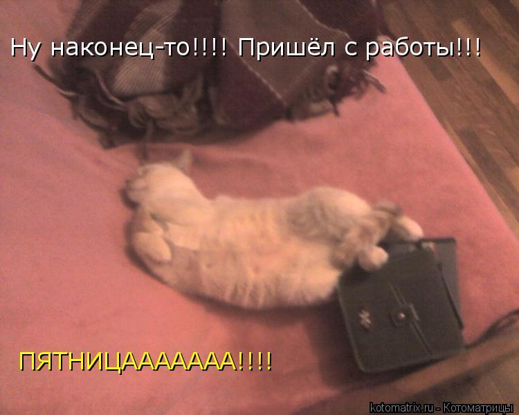 Котоматрица: Ну наконец-то!!!! Пришёл с работы!!! ПЯТНИЦААААААА!!!!