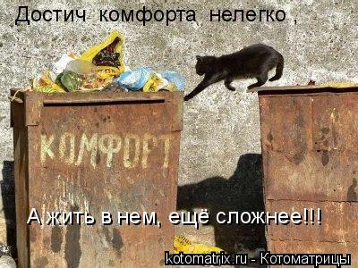 Котоматрица: Достич  комфорта  нелегко , А жить в нем, ещё сложнее!!!