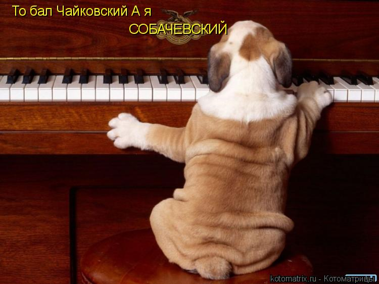 Котоматрица: То бал Чайковский А я СОБАЧЕВСКИЙ