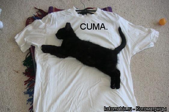 Котоматрица: CUMA.