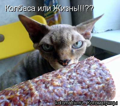 Котоматрица: Колбаса или Жизнь!!!??