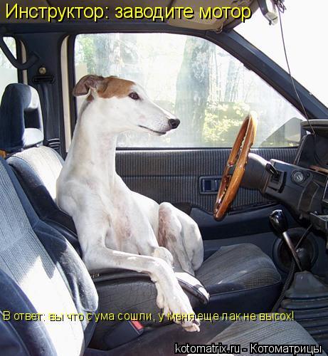 Котоматрица: Инструктор: заводите мотор В ответ: вы что с ума сошли, у меня еще лак не высох!